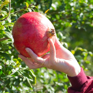 Granada ecológica de 1 kg cultivada sin pesticidas