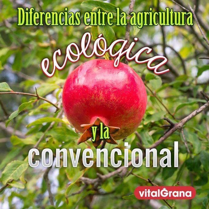 Diferencias entre la agricultura ecológica y la agricultura convencional