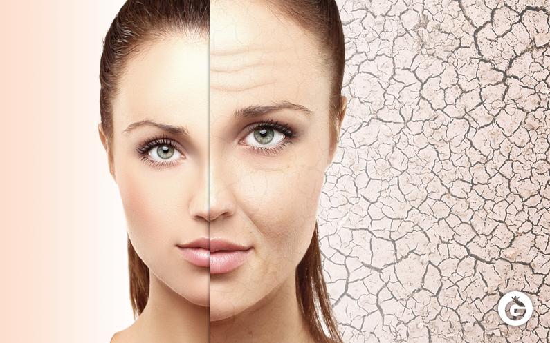 Envejecimiento Celular¿Qué son los antioxidantes?