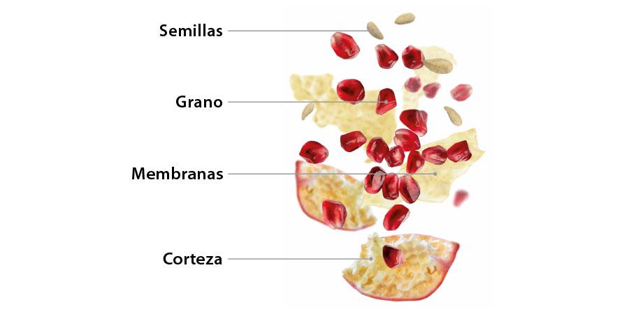 El zumo de granada Vitalgrana contiene todos los componentes