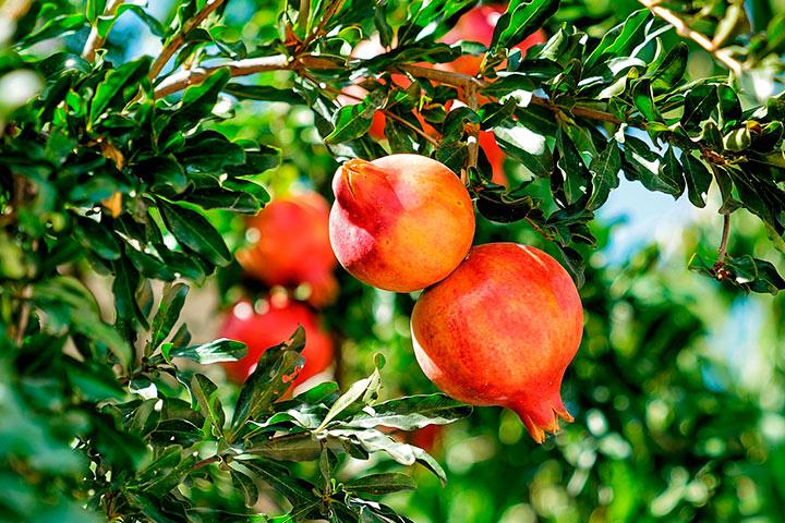 Propiedades antioxidantes