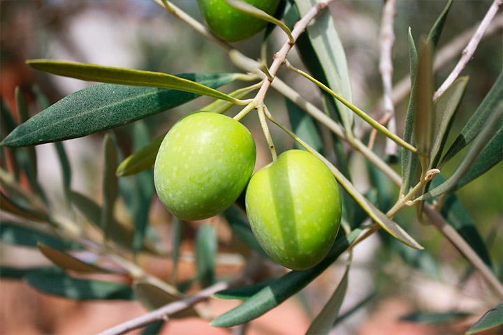 ¿Qué es el hidroxitirosol? ¡El mejor antioxidante natural!