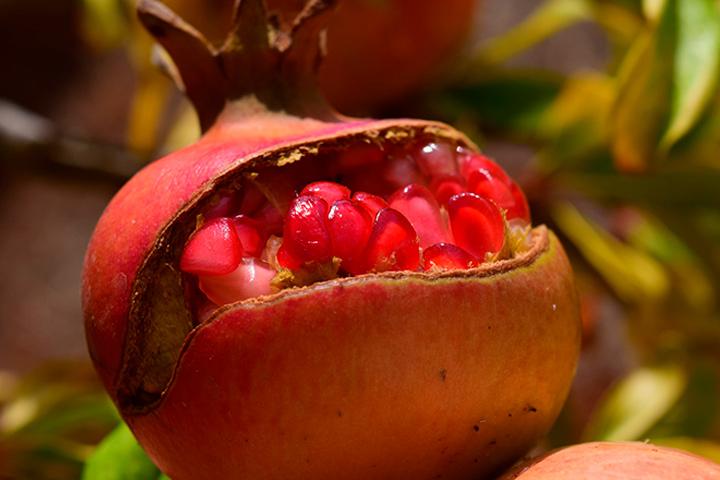 ¿Un diabético puede comer granada? ¡Tiene muchos beneficios!